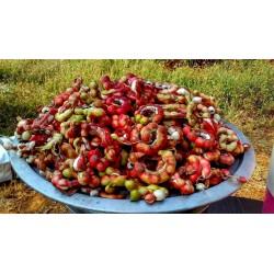 Graines de Tamarin D'inde (Pithecellobium dulce)