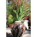 Zebra Grass (Miscanthus sinensis Zebrinus)