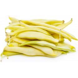 Σπόροι Φασόλι Ιερουσαλήμ (Phaseolus vulgaris L.)