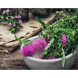 Saint Mary's thistle Seeds (Silybum marianum)