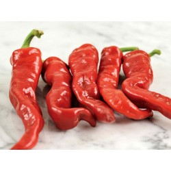 Maule's Red Hot Pepper Seeds (Capsicium annuum)