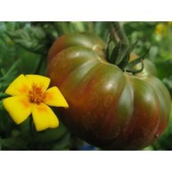 Tomato Pantano Romanesco - Beefsteak Seeds (Lycopersicon esculentum)
