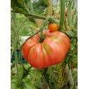 Organic Black Beauty Eggplant Seeds