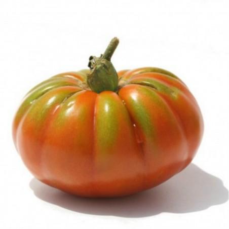 Seme paradajza Pantano Romanesco