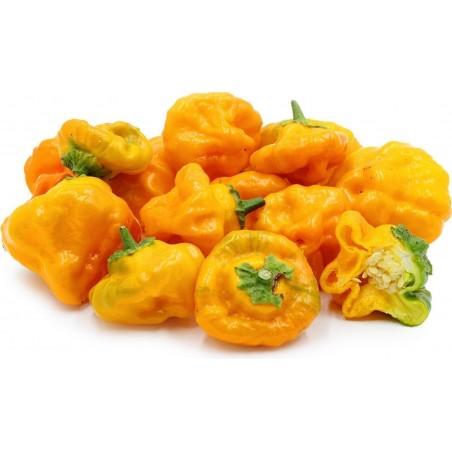 Cap Mushroom Red or Yellow Chili Seeds
