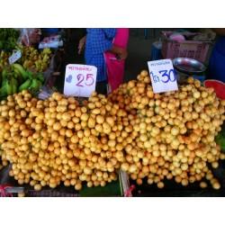 Indisches Blumenrohr - Rote Canna Samen (Canna indica)
