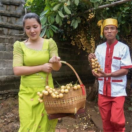 Semillas de Uva Birmana (Baccaurea ramiflora)