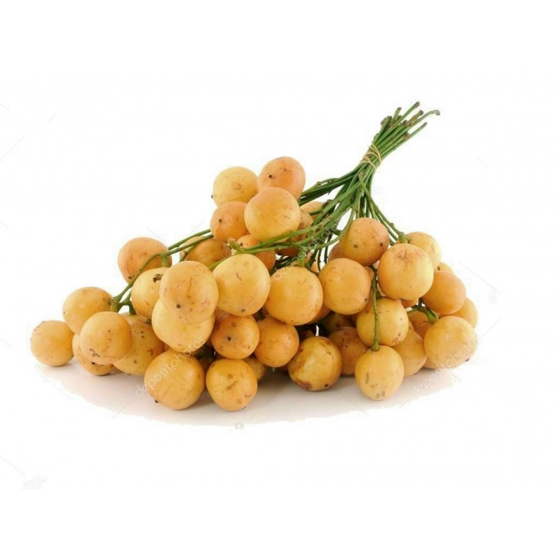 Burmese Grape Seeds (Baccaurea ramiflora)