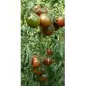 Semillas de Albahaca Griega (Ocimum minimum)