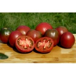 Semi di pomodoro zingaro