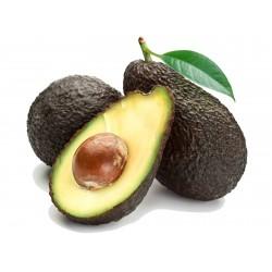 Schwarze Avocado Samen (Persea americana)