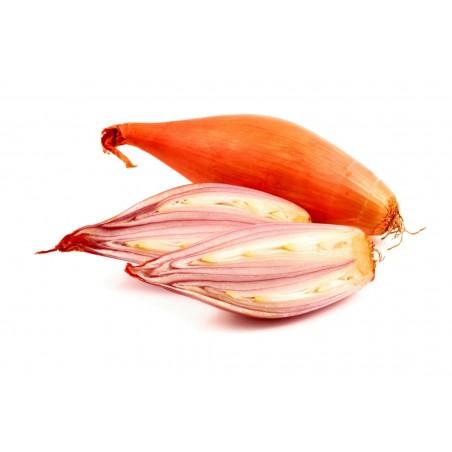 Schalotte, auch Edelzwiebel Zwiebeln / Samen