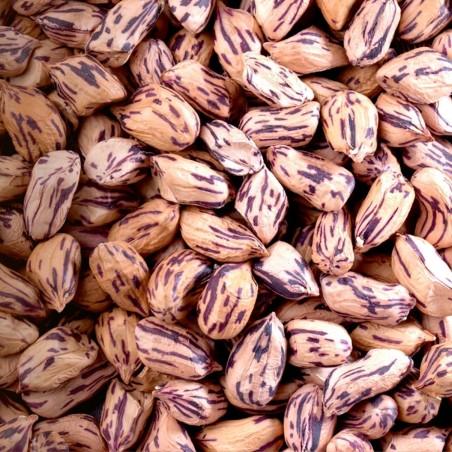 Tiger Peanut Seeds (Arachis Hypogaea)