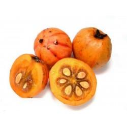 Seeds Cowa Mangosteen, Kandis, Village Kandis (Garcinia cowa)