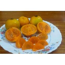 Seme egzoticnog voca Cowa Mangosteen, Kandis (Garcinia cowa)