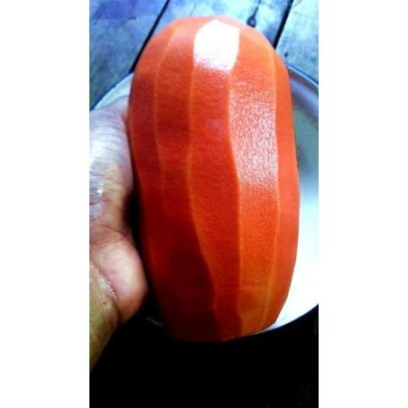 Röd Karibisk Papaya Frön (Carica papaya)
