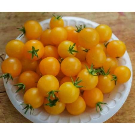 Hängetomate Tumbling Tom Rot und Gelb Samen