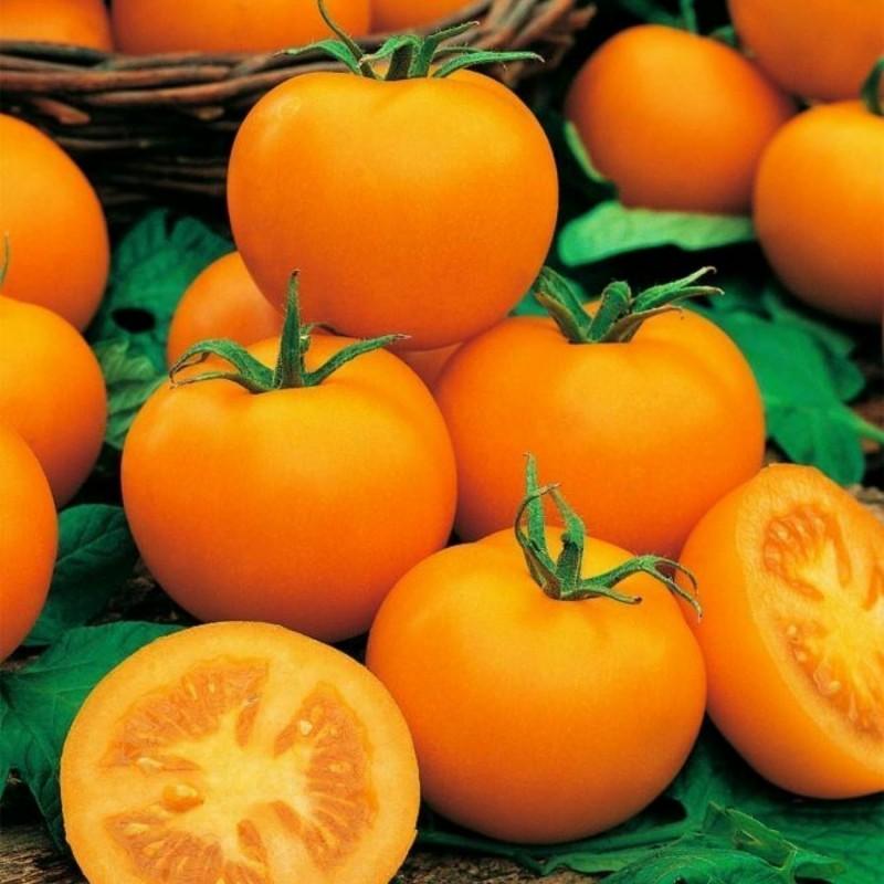 Semillas de Tomate Goldene Königin