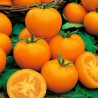 850 Semillas de Tomate Goldene Königin