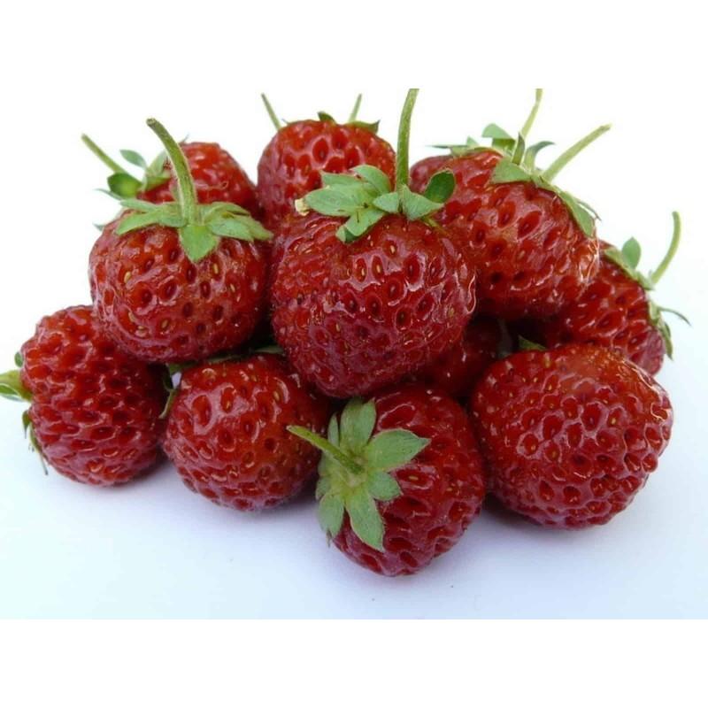 "Rare ""Framberry"" Strawberrie Seeds ""RED DREAM"""