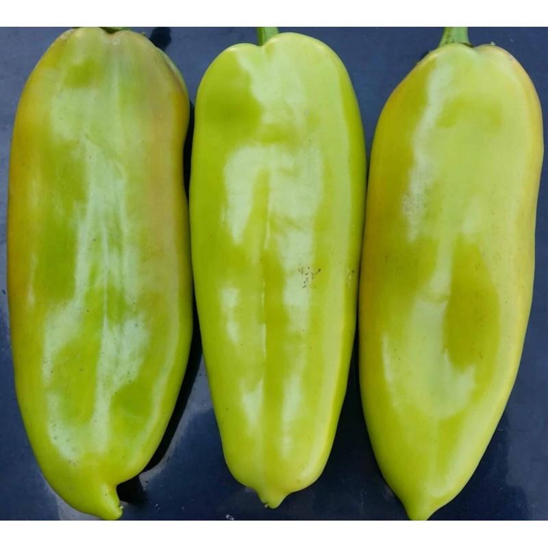 Egzoticna BANANA Dinja Seme - Cantaloupe