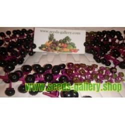 Phytolacca Americana 'Silberstein' Seeds