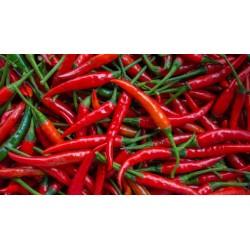 """Serbian hot chilli """"Crvena feferona"""""""