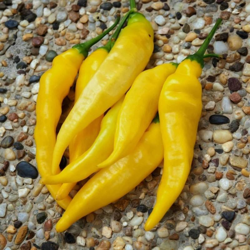 Aji Pineapple Chili - Cili Seme