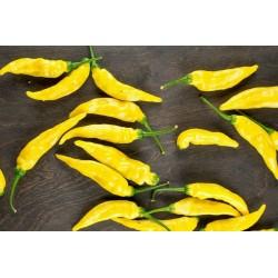 Σπόροι Τσίλι Πιπέρι Aji Pineapple