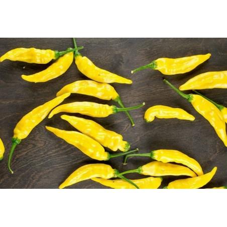 Σπόροι πεπονιού Piel de Sapo (Cucumis melo)