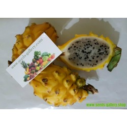 Dragon Fruit Yellow Seeds - Pitaya, Pitahaya Fruit