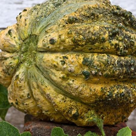 Zatta Melon Seeds