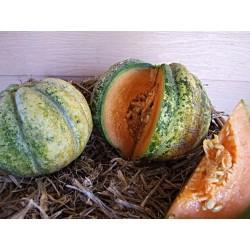 Zatta Melonen samen