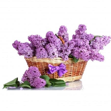 Sementes de Lilás (Syringa vulgaris)