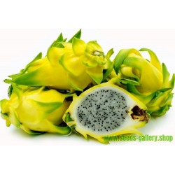 Graines de Pitaya Jaune - Fruit du Dragon