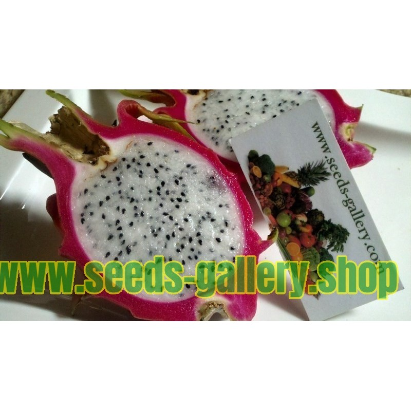 Zuti Dragon Fruit Seme - Zmajevo Voce