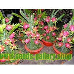Dragon Fruit Rare Exotic Seeds Health Fragrant