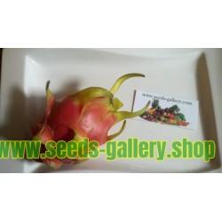 Dragon Fruit Seme - Zmajevo Voce sa belim mesom