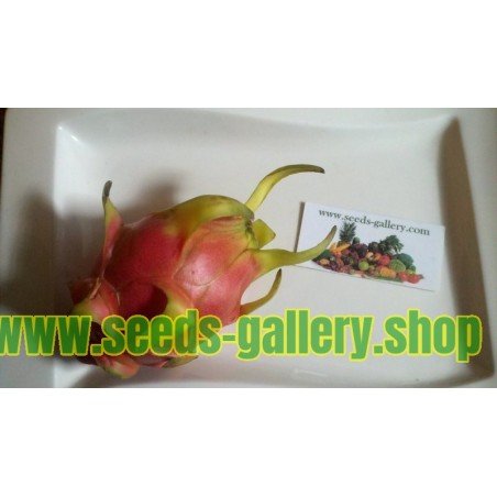 Graines de Pitaya Fruit Du Dragon