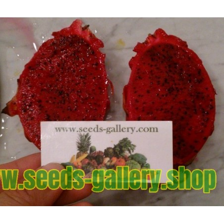 Semi di Pitahaya rossa (carne rossa)