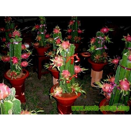 Pitahayasläktet Frön eller skogskaktusar