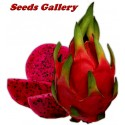 Φρούτο Του Δράκου Πιτάγια Κόκκινο Σπόροι