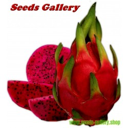 Pitaya Fruit, Pitahaya Fruit, Dragon Fruit Seme - Zmajevo Voce sa crvenim mesom