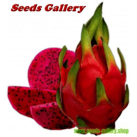 Drachenfrucht Samen Pitahaya Mit Roten Fleisch