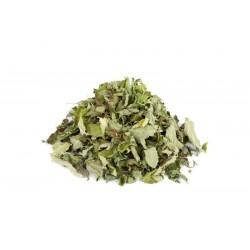 Σπόρος μέντα (Mentha × piperita)