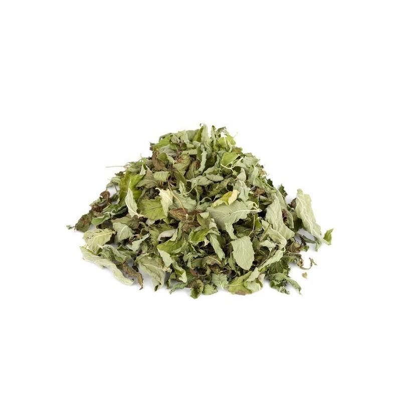 Pfefferminze Samen - Arzneipflanze des Jahres