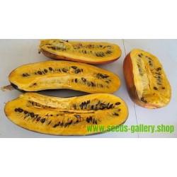 Cassabanana Seme, Sikana, Egzoticno voce (Sicana odorifera)