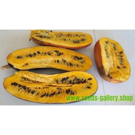 Cassabanana frukt Fröer (Sicana odorifera)