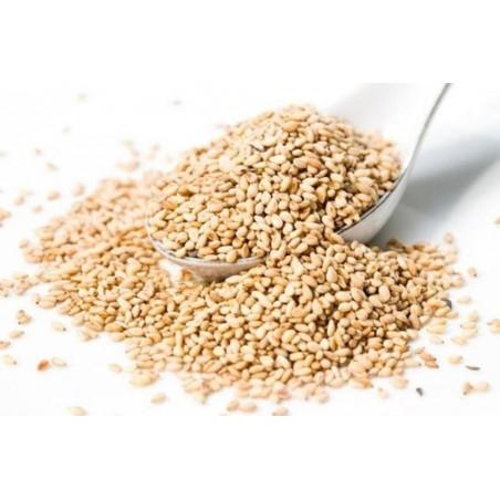 Vit Sesam växt krydda (Sesamum indicum)