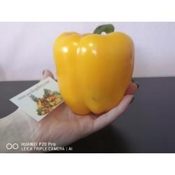 Semi di Rosso Pepper 'Monster Giant'